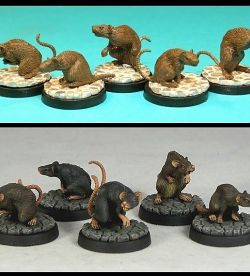 Giant Rats